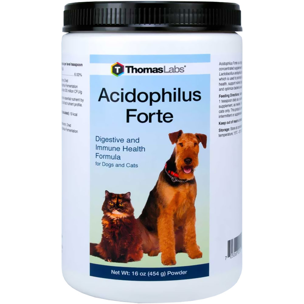 Thomas Labs Acidophilus Forte Powder (16 oz)