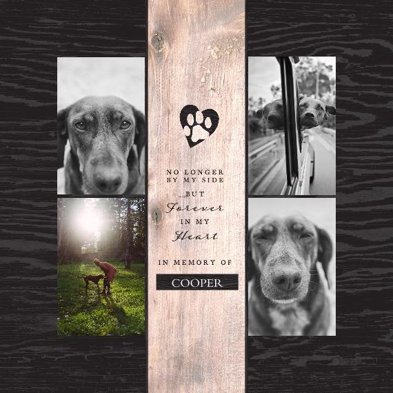 Pet Framed Canvas Print, Chocolate, 12x12, Home Décor -The Good Pet