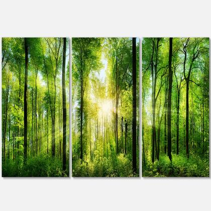 PT7211-3P Forest With Rays Of Sun Panorama - Landscape Art Print Canvas - 36X28 - 3