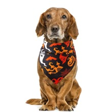 1 Stueck Dreieckiges Laetzchen mit Halloween Muster fuer Hunde