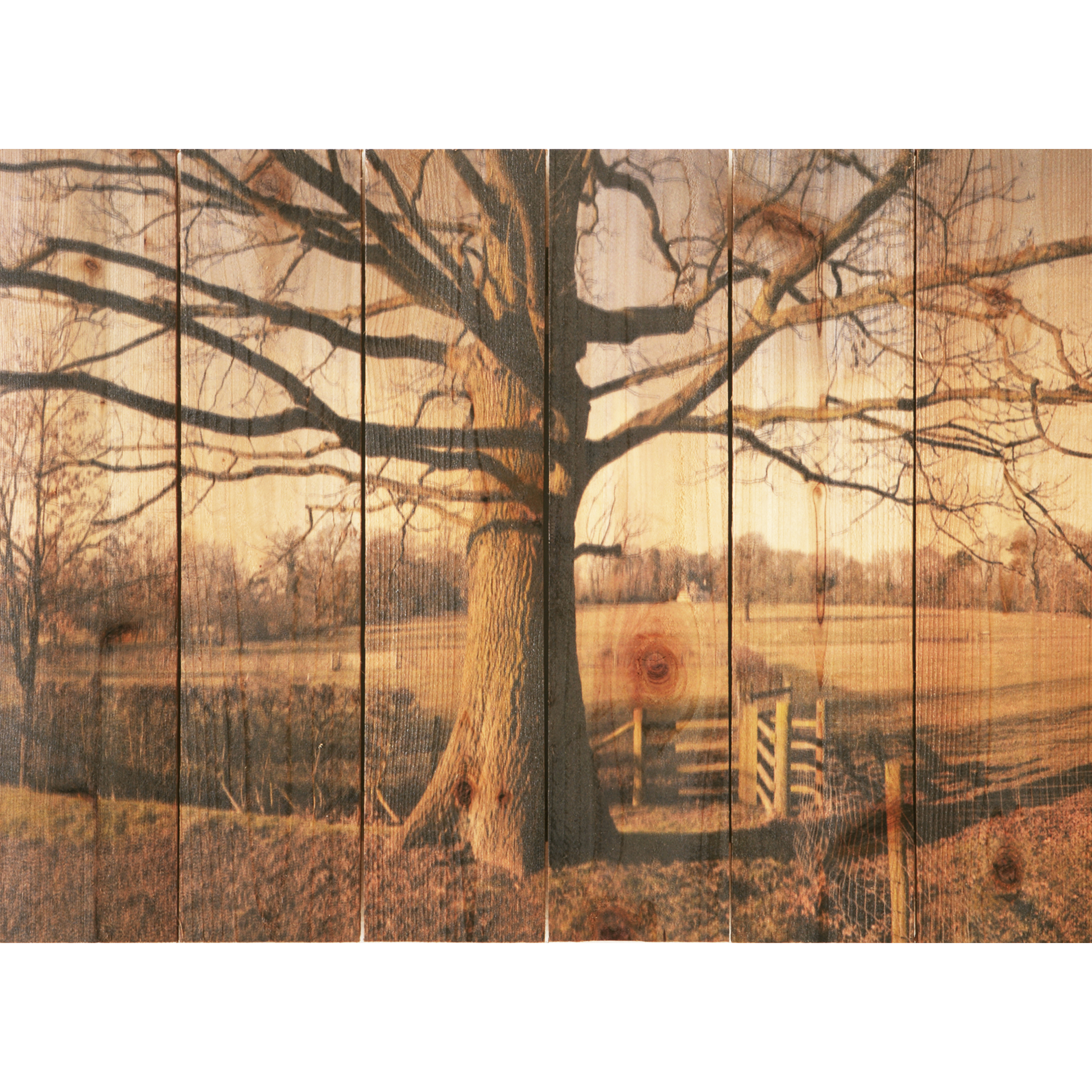Daydream Gizaun Cedar Wall Art, Big Oak, 33