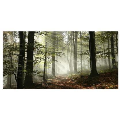 PT9835-40-20 Light In Dense Fall Forest With Fog - Landscape Art Print Canvas -