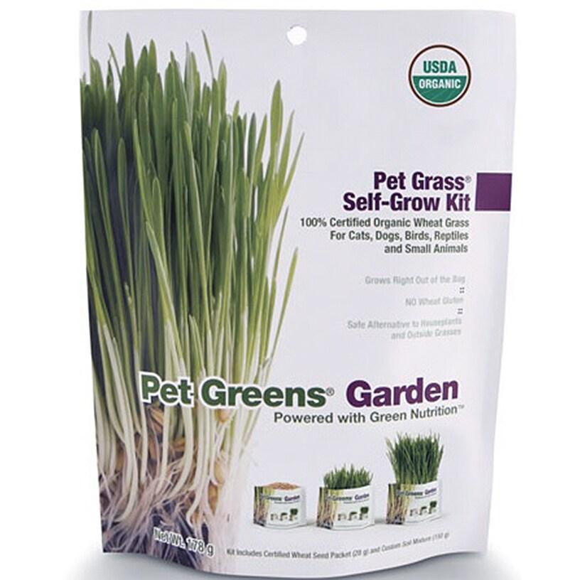 Bellrock Growers Pet Greens Cat Organic Self Grow Kit (669828550052)