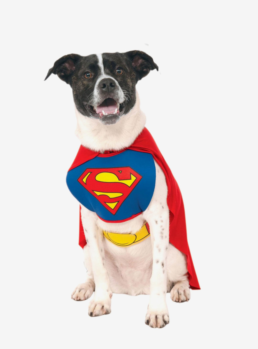 DC Superman Pet Costume