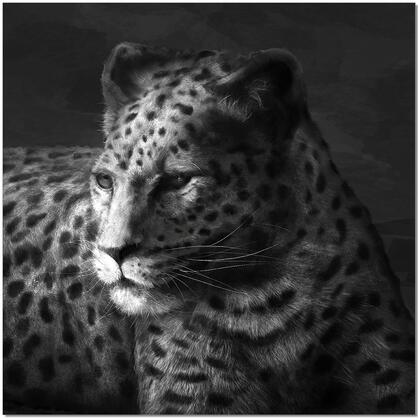 18181 Cheetah 47 W 47 H Wall