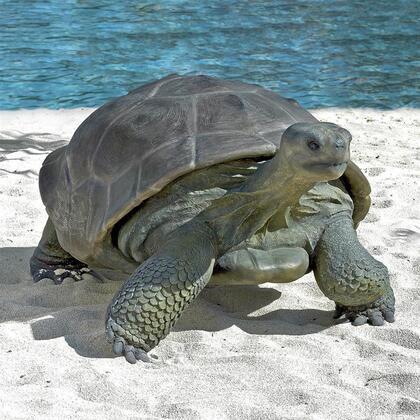 NE80124 Grand Scale Galapagos Tortoise