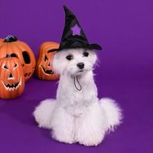 Halloween Hund Hut mit Stern Muster