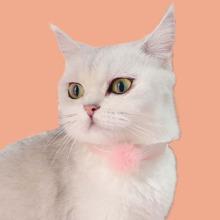 Katze Pluesch Halekette mit Pompon & Ruechen Dekor