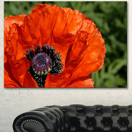 Designart Close Up View Of Red Poppy Flower FloralCanvas Art Print - 3 Panels, One Size , Red