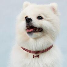 1 Stueck Hundehalsband mit Strass
