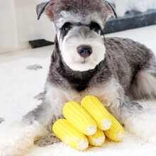 1pc Corn Shaped Dog Chew Toy