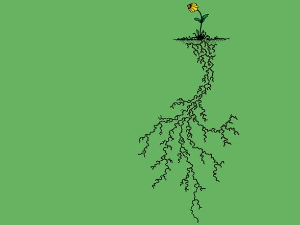 Root System T Shirt