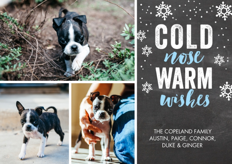 Christmas Photo Cards 5x7 Cards, Premium Cardstock 120lb with Scalloped Corners, Card & Stationery -Holiday Pet Warm Wishes by Tumbalina