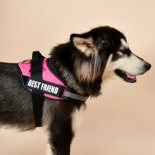 1pc Letter Graphic Dog Harness