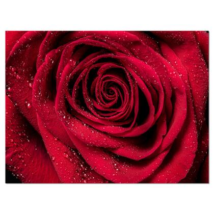 PT10000-40-30 Red Rose Petals With Rain Droplets - Floral Art Canvas Print -