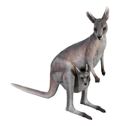 NE100105 Australian Outback Kangaroo