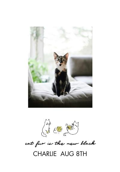Pet Framed Canvas Print, Chocolate, 20x30, Home Décor -Hipster Kitten