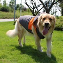 Chaqueta de perro con capucha de color combinado
