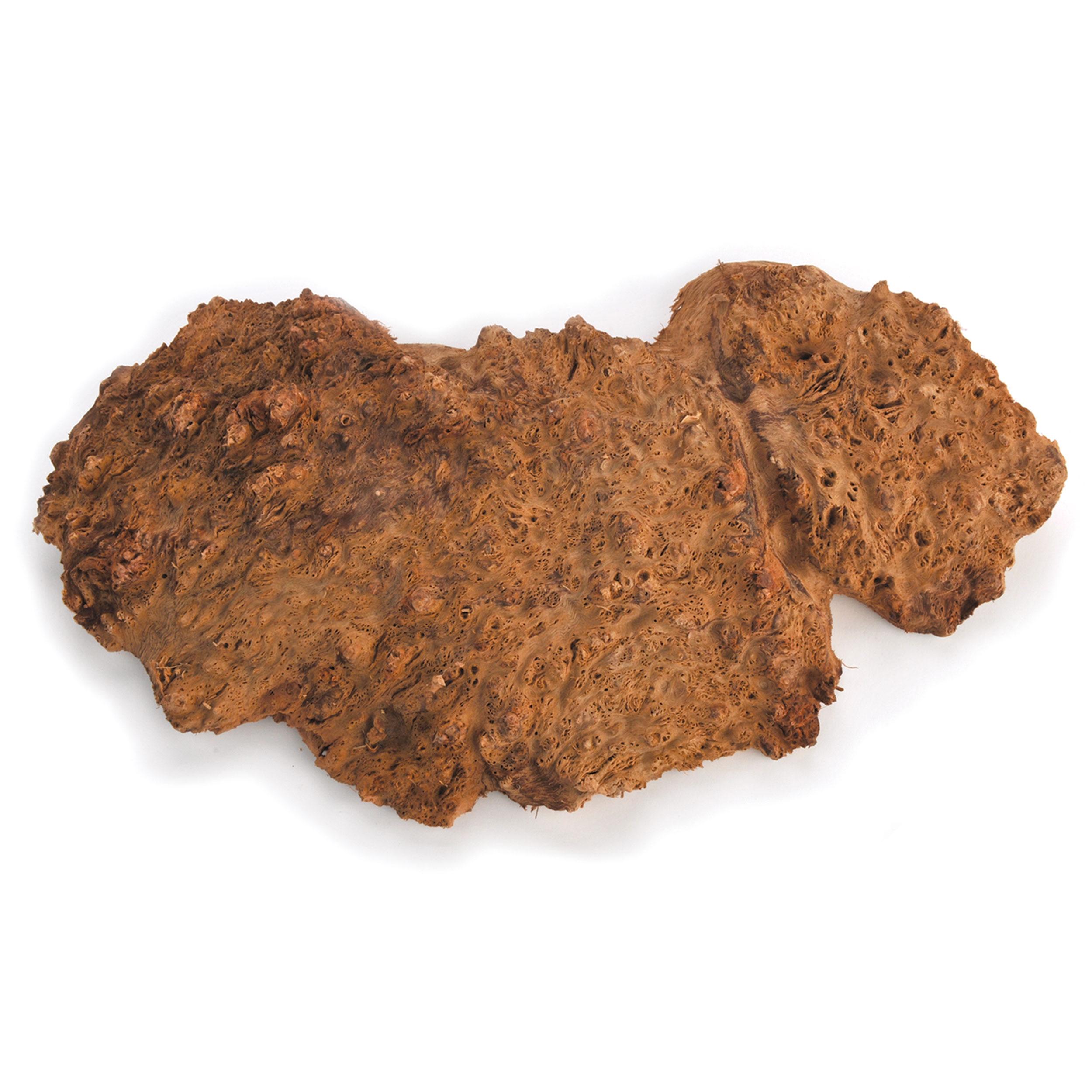 Australian Red Coolibah Burl Cap 1kg ? 2kg
