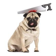 1 Stueck Halloween-Spielzeug mit Messer Dekor fuer Hunde