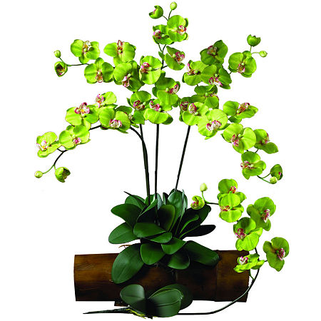 Nearly Natural Phalaenopsis Floral Arrangement, One Size , Green