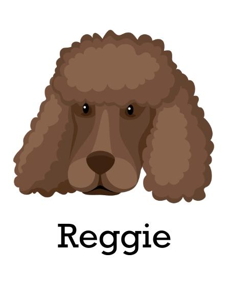 Pet 11x14 Poster, Home Décor -Poodle Shaved 2