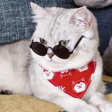 1 Stueck Katze Sonnenbrille mit runden Glaesern