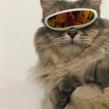 1pc Cat Windproof Glasses