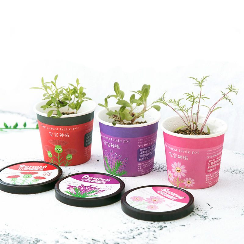 Creative Micro Landscape Mini Cute Little Flower Pot DIY Small Bonsai Plantas Ecological Plant Seeds For Home Garden Dec