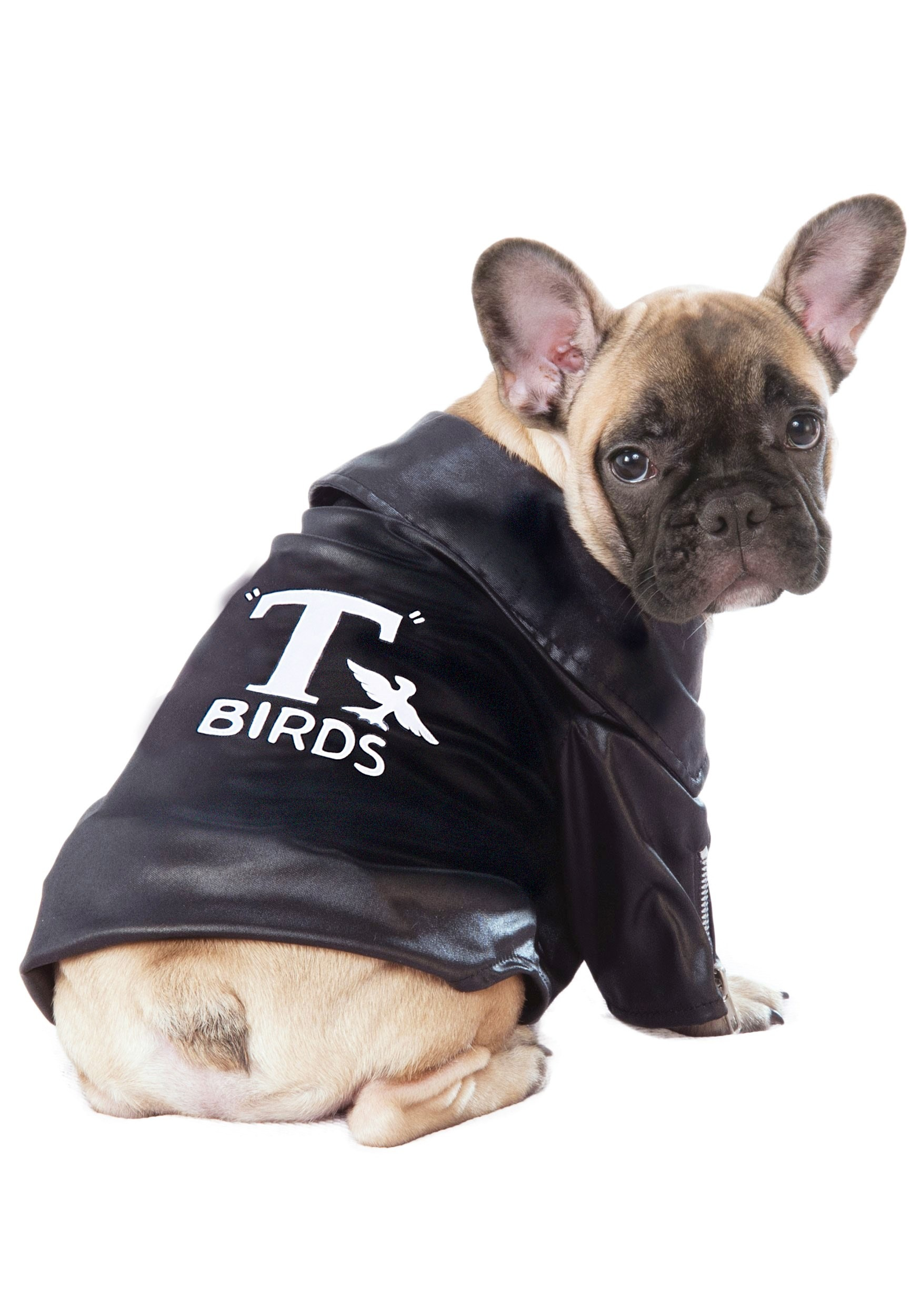 Grease T-Birds Cool Jacket Pet Costume