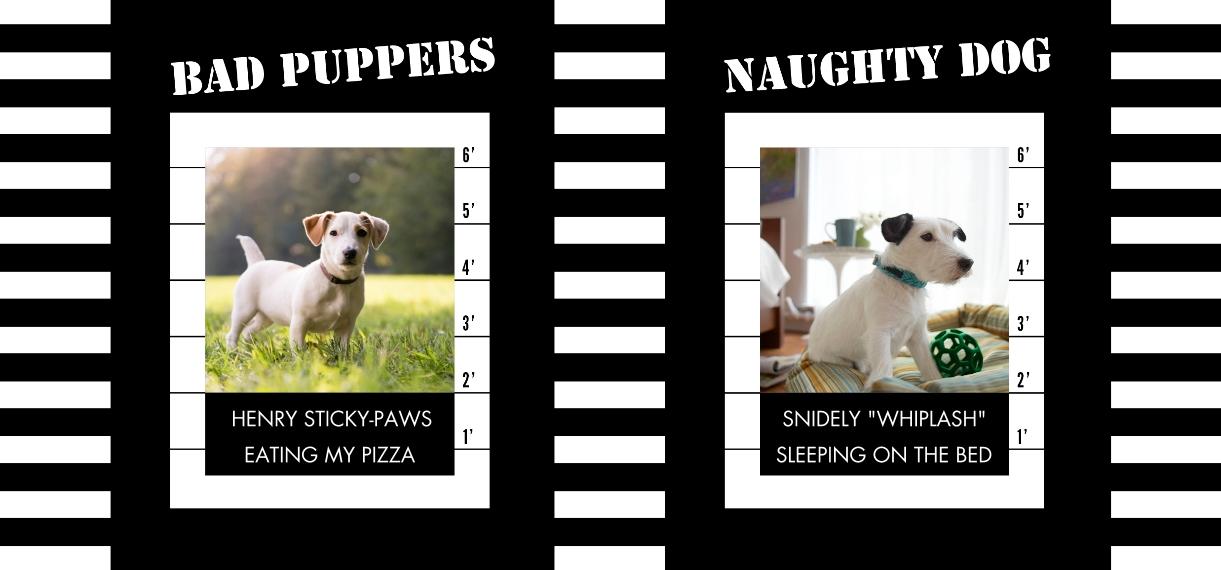 Pets 11 oz. Navy Accent Mug, Gift -The Naughty Dog