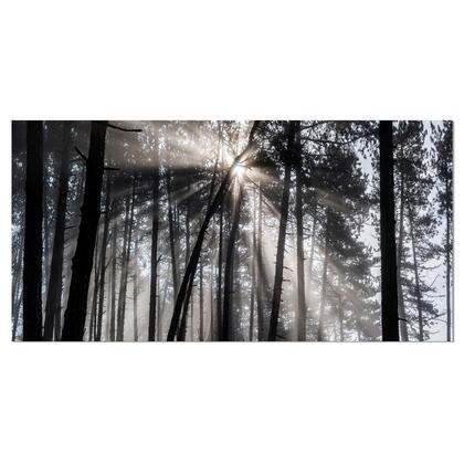 PT9987-60-28 Sunbeams Through Black White Forest - Forest Canvas Wall Art Print -