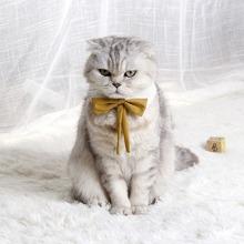 1 Stueck zufaellige Farbe Katze Schleife