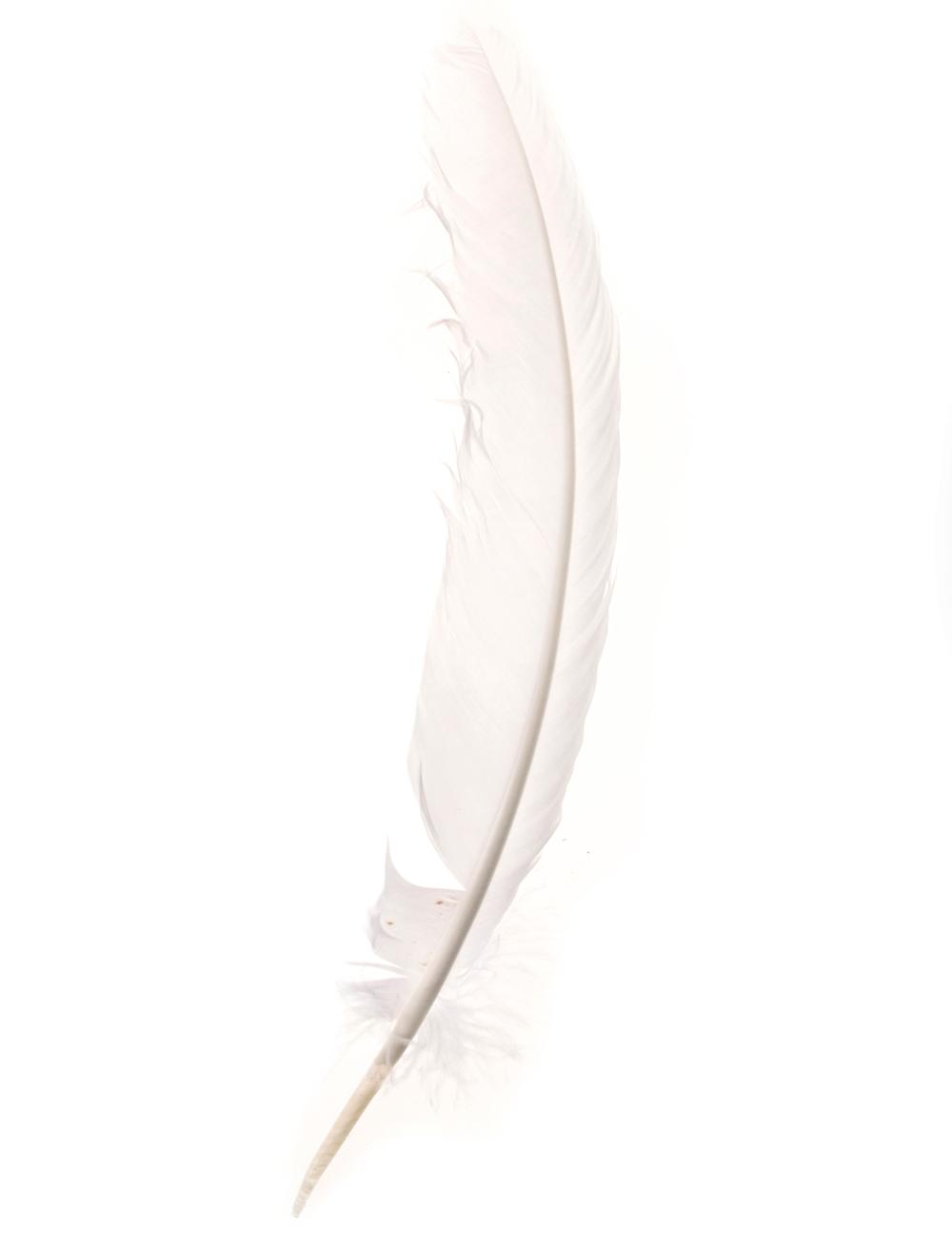 Kostuemzubehor Indianerfeder weiss 25-30cm