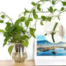 5 piezas accesorio de pared para escalar plantas