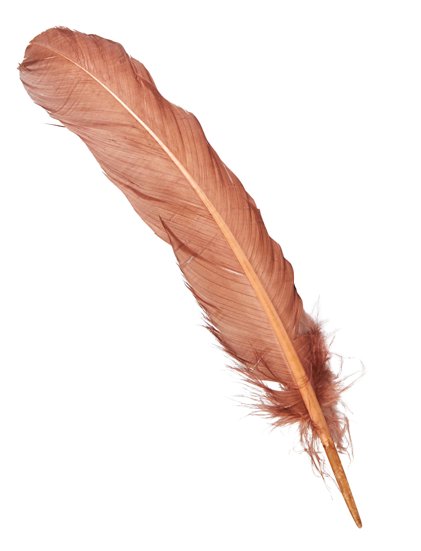 Kostuemzubehor Indianerfeder braun 25-30cm