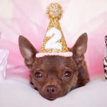 Pom-pom Decor Glitter Dog Hat
