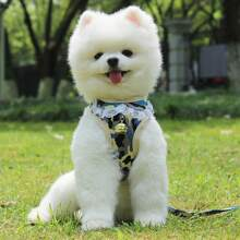 1 Stueck Hund Geschirr mit Glocken Dekor und Camo Muster