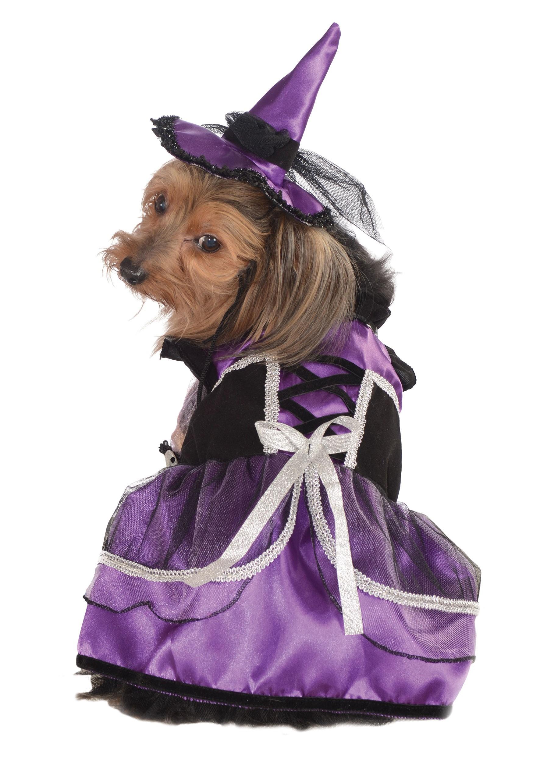 Witch Pet Purple Costume