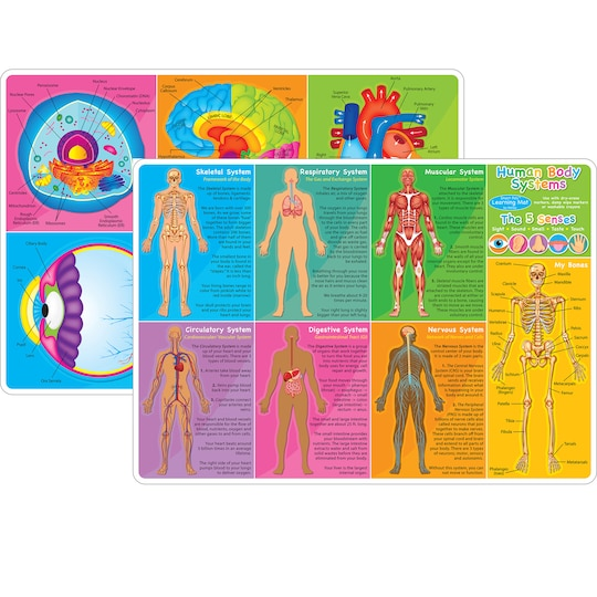 Ashley Productions Smart Poly™ Human Body Systems & Anatomy Learning Mats, 10Ct. | Michaels®