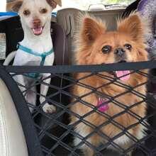 Red del recinto de la seguridad del coche al aire libre del perro