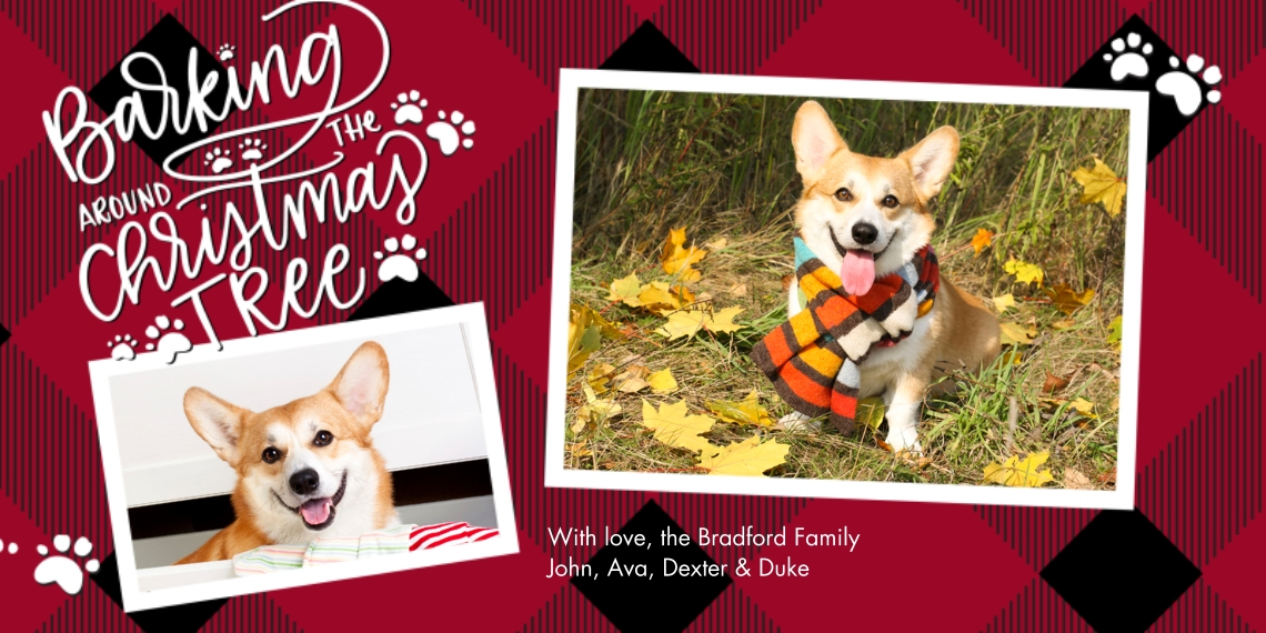 Christmas Photo Cards Flat Glossy Photo Paper Cards with Envelopes, 4x8, Card & Stationery -Christmas Paw Prints Plaid by Tumbalina