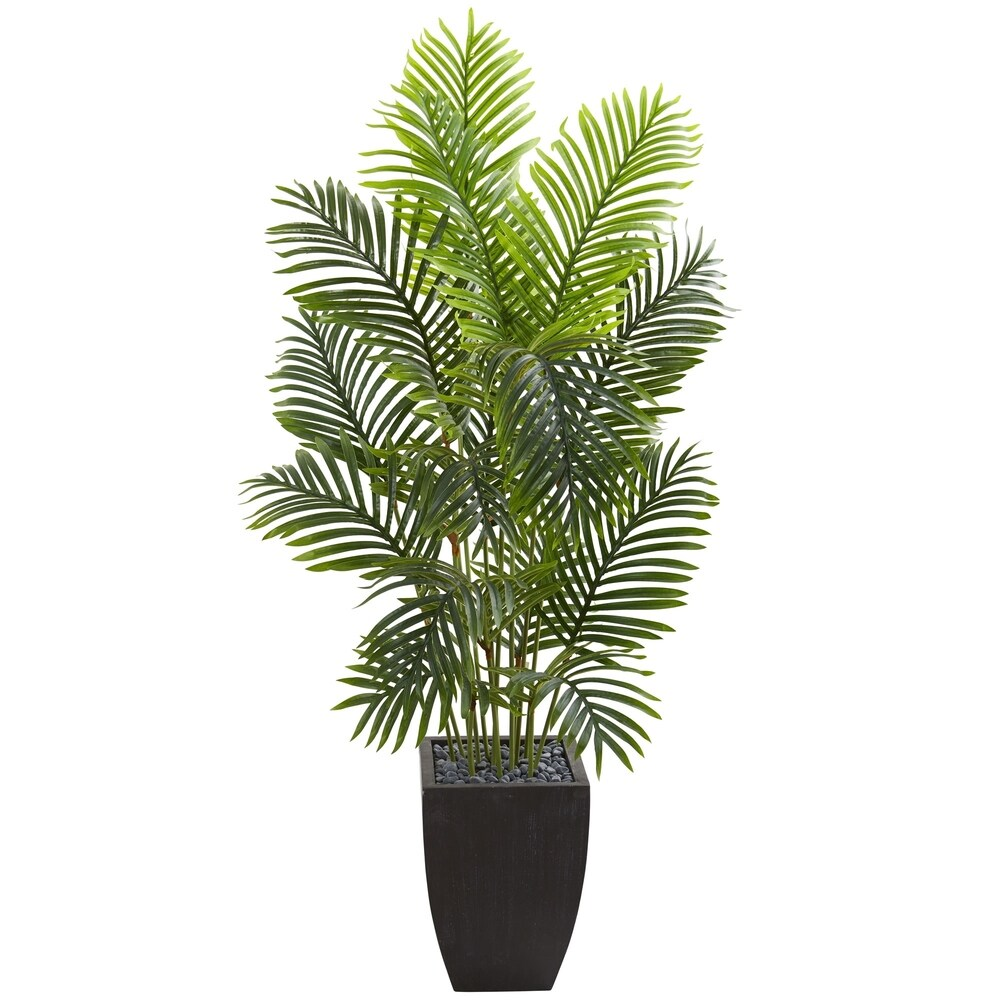 5.5' Paradise Palm Artificial Tree in Square Planter - h: 5.5 ft. w: 28 in. d: 28 in (h: 5.5 ft. w: 28 in. d: 28 in)