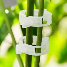 50pcs Plants Fixed Clip