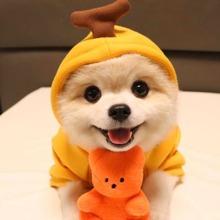 Hund Hoodie mit Baeren Dekor