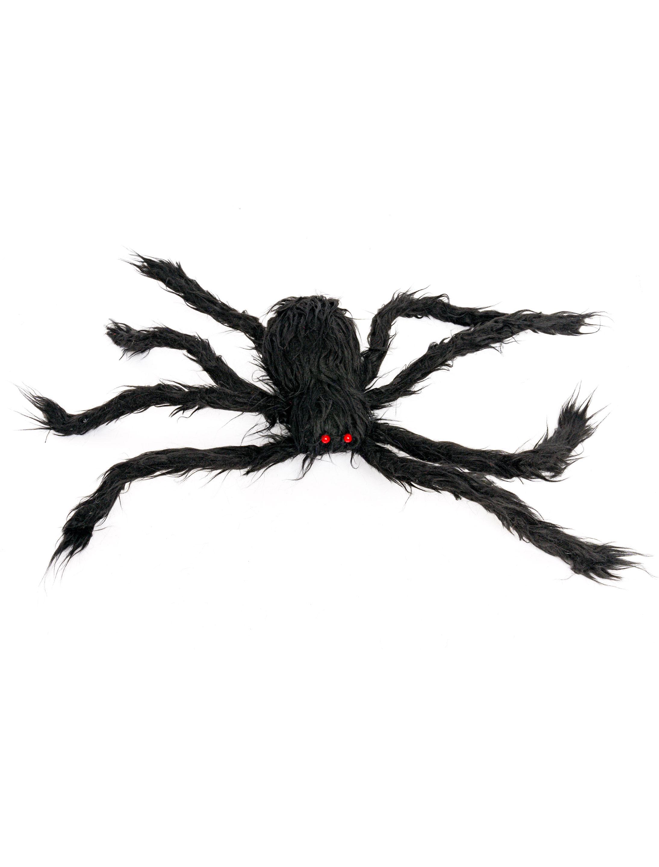 Spinne behaart schwarz