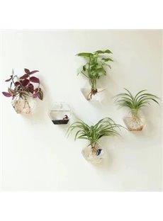 Wonderful 1-Piece Wall Hanging Hexagonal Green Plants Glass Terrarium