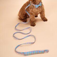 1 pieza collar de perro con lazo con 1 pieza correa