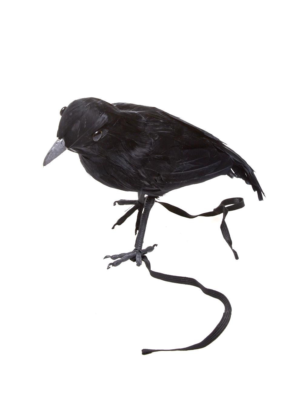 Kraehe mit Band Farbe: schwarz