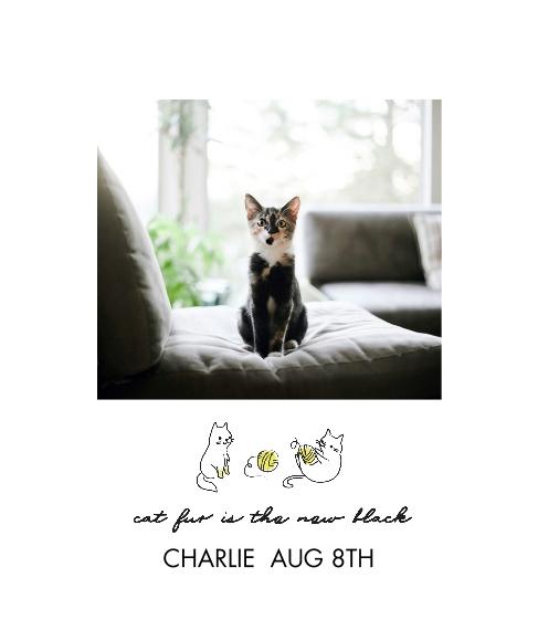 Pet Canvas Print, 20x24, Home Décor -Hipster Kitten